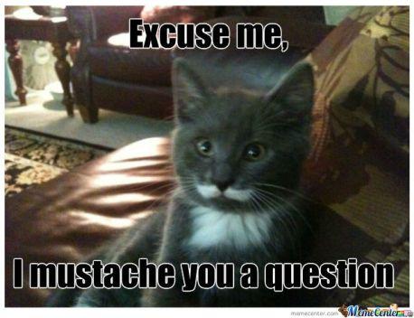 mustache-cat_o_1237353